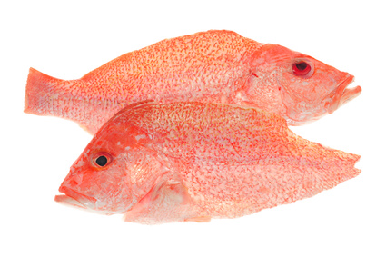 Buy Snapper from Fish Co Midlands