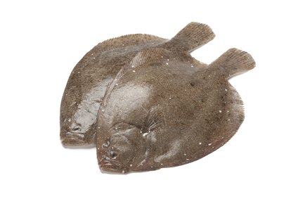 Buy Brill Flat fish from Fish Co Midlands
