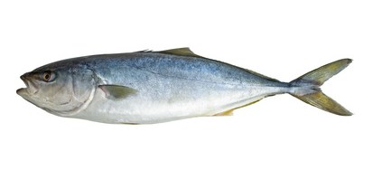 Buy Tuna Game Fish from Fish Co Midlands
