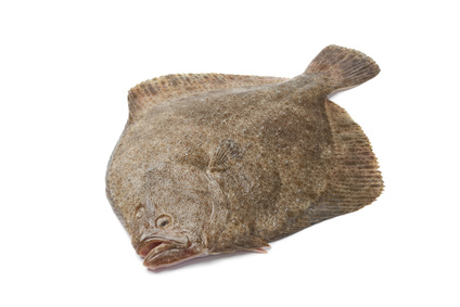 Buy Turbot from Fish Co Midlands