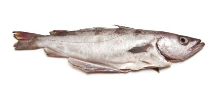 Buy Pollock from Fish Co Midlands
