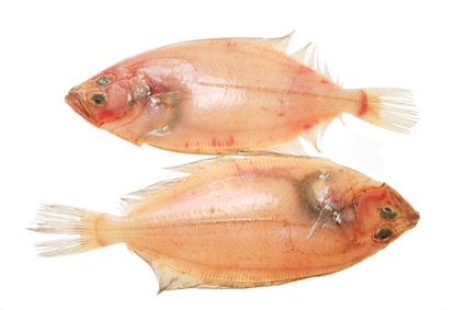 Buy Megrim from Fish Co Midlands