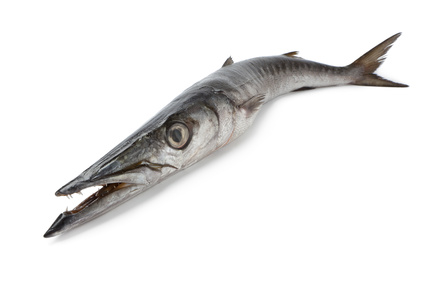 Buy Barracuda from Fish Co Midlands