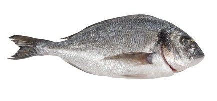 Buy Sea Bream from Fish Co Midlands