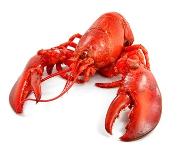 Buy Lobster from Fish Co Midlands
