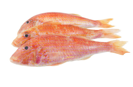 Buy Red Mullet from Fish Co Midlands